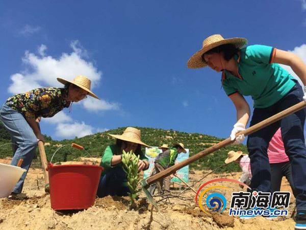 """海南妇联屯昌开展""""种植和谐幸福林""""活动百余人植树"""