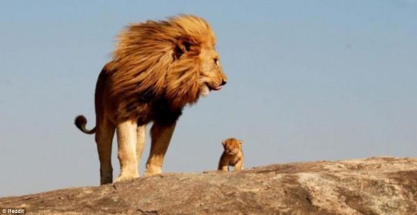 动物界最和谐家庭照 小孩都是父母的跟屁虫!