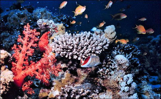 文昌22.5吨珊瑚礁被非法贩卖村民4元/包买走