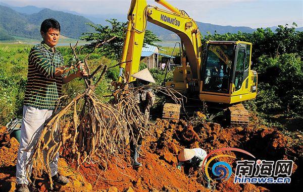 东方调整优化农业产业结构