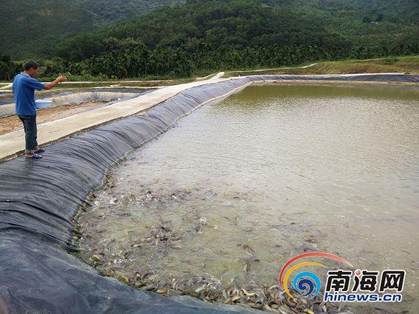 目前,村民投入改造稻田,围网,进排水管道等建设资金2万元,投放泥鳅苗