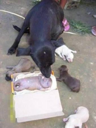 """震惊生物界!母狗产下人形怪物有人的生殖器 狗""""怪物""""呈人形"""