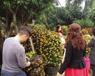 海口花卉盆栽生意火爆市民买花买金桔讨吉利过年