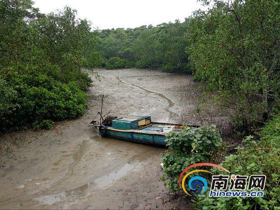 景区红树林中的游船放在林中无人过问。南海网记者