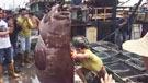 渔民捕获350斤重石斑鱼