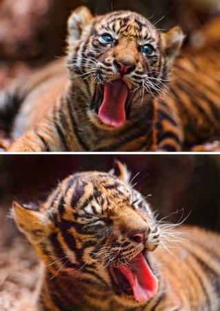 盘点动物们的欢乐瞬间:猫鼬皮笑肉不笑(图)