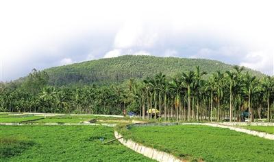 琼海长坡:用休闲农业打造百姓幸福家园