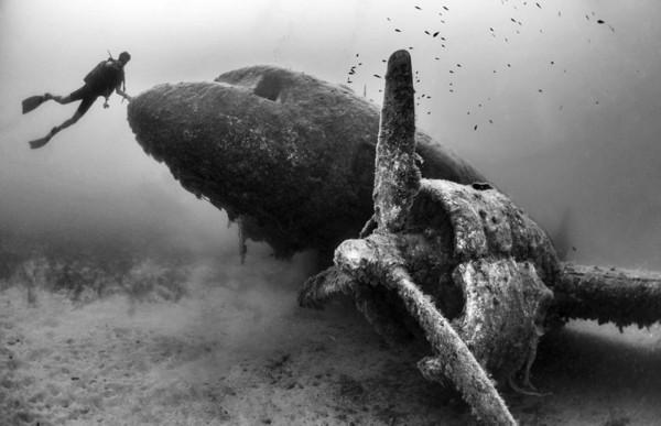 图为参赛作品.-全球水下摄影大赛图片