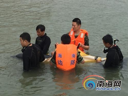 """受伤海豚游入万宁港口""""求救""""获救鸣叫仿佛道谢"""