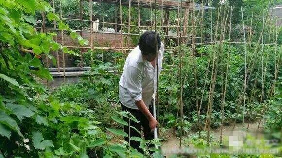 """朱之文下地干活.他说:""""菜园子都涨起来了,菜陆陆续续下来了,"""