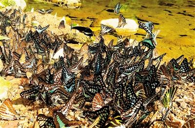 海南昆虫资源丰富神奇绚烂绝大部分对人类有益