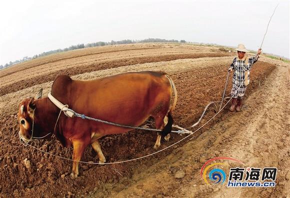 如何让农民大有作为海南需破解农村劳力流失问题