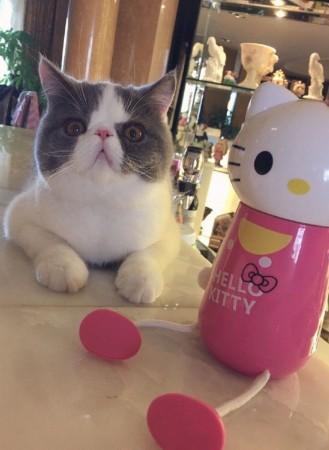 壁纸 动物 猫 猫咪 小猫 桌面 329_450 竖版 竖屏 手机