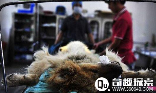 探访实拍陕西动物实验中心 胆小勿入