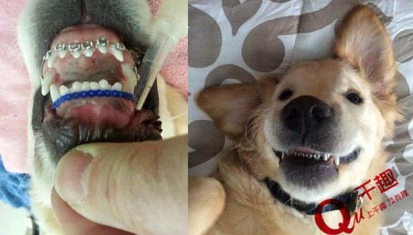 动物嘴巴牙齿手工diy