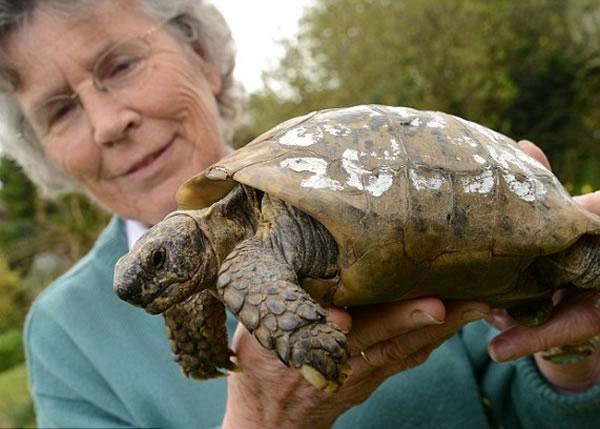 的宠物龟_因背上有署名,百岁宠物龟终与主人团聚