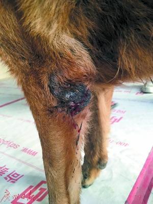 淫虐杀动物被杀的案件_深圳男子自称虐杀50多只狗惹众怒 只因幼时曾被狗咬过