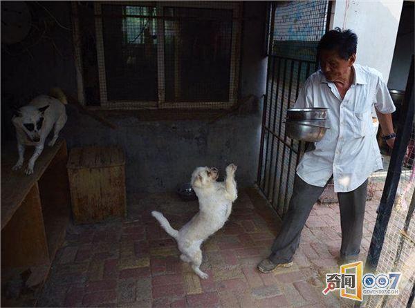 山东七旬老人坚持28年收养流浪动物