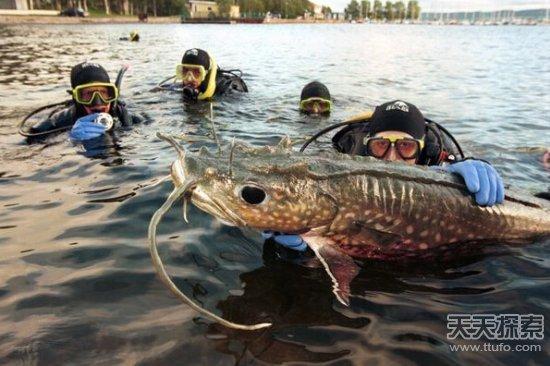 千万别碰 世界上13种最可怕淡水动物