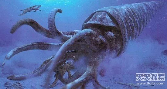 人间百态       大概是地球上的第一批霸主,5亿年前的海中食物链顶端.