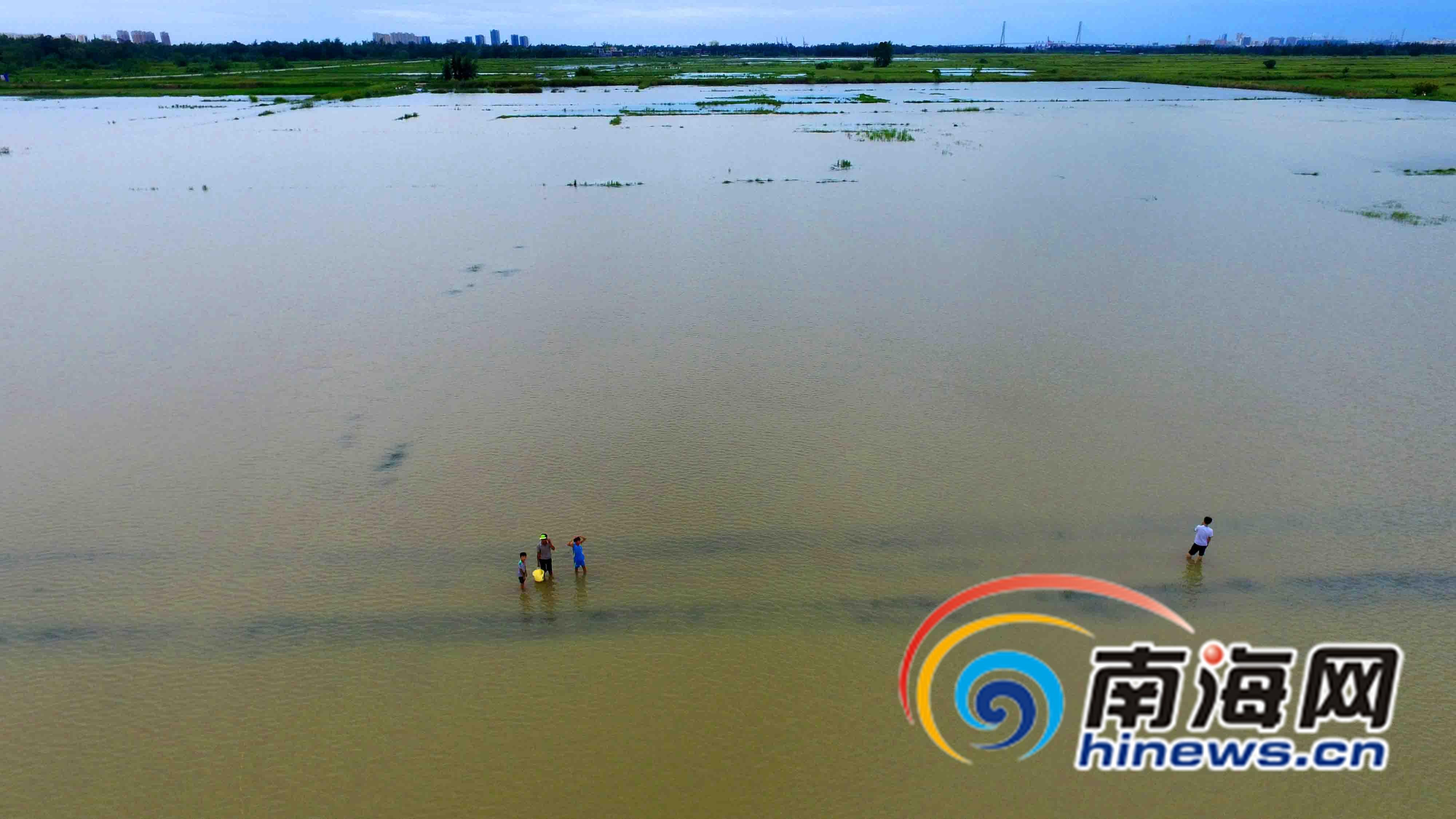 8月19日,儋州市白马井镇竹古村附近的田洋一片汪洋,农作物遭到很大的