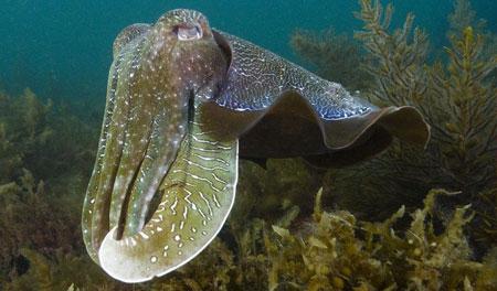 海底稀奇古怪的动物