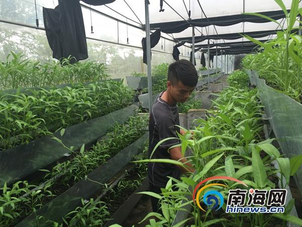 享尚岛:发展生态健康农业 借农创客平台扶持大学生创业