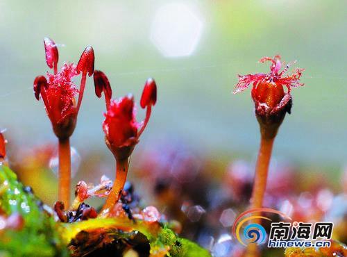 海南鹦哥岭国度级保护区发明两个植物新种