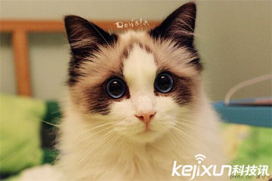 最漂亮的猫_世界上最漂亮的猫 图片 蛋蛋赞