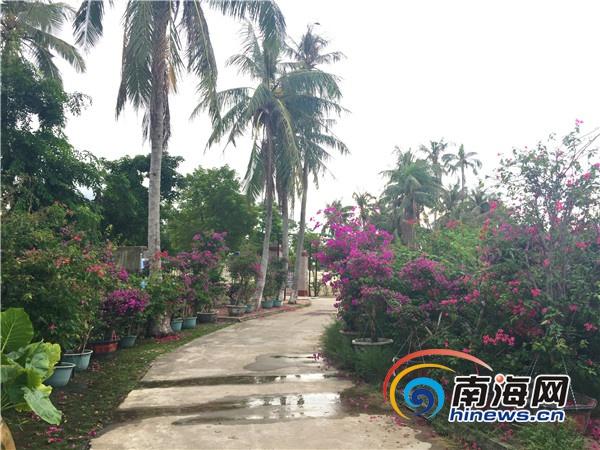 媒体采风团走进万宁溪边村 感受万紫千红三角梅