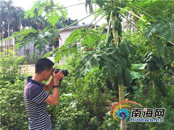 <b>采风团在万宁文渊村感受美丽和宜居</b>