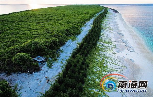 三沙景色宜人:植被繁茂 可固沙�o坡