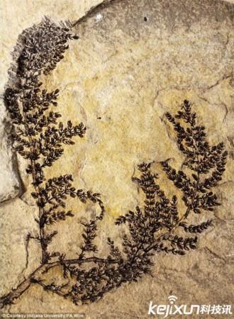 25亿年前!地球上第一朵花被发现