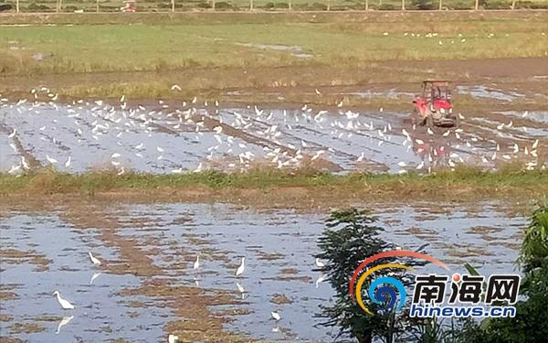 三亚天涯区秸秆还田1.5万余亩 预计本月中旬完成