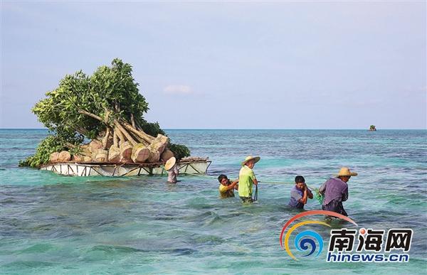 """南海上的""""纤夫"""":工人三沙海域拖运树木"""