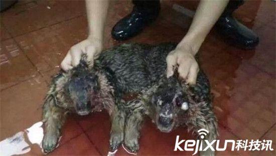 广东水库抓到一只水鬼 是传说中的水猴子?