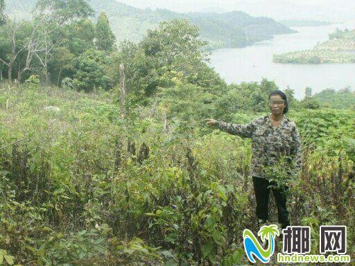 剥皮致树枯死再种芒果 东方两名女子滥伐林木后投案