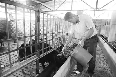 定安龙湖镇安仁村:村民养黑山羊年增收40余万