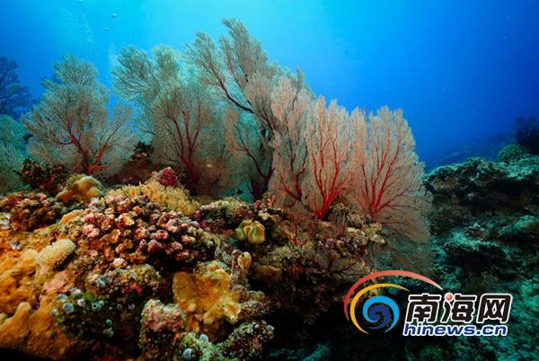 三沙珊瑚群惊艳摄影师渔民笑称:有更漂亮的[组图]