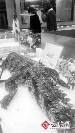 """近日,有市民向晚报反映,宜良县的一家超市里卖起了鳄鱼肉。8日,记者来到了这家超市,看到一条没有头的鳄鱼摆在柜台上,旁边围着好奇的顾客:""""鳄鱼不是保护动物吗?可以吃吗?""""对此,相关部门表示,人工养殖的鳄鱼是允许售卖的,不过要经过主管部门批准,办理相关证件。"""