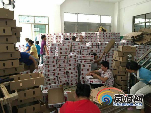 南海网微商城受青睐北京河南客商一次性订购8万斤火龙果