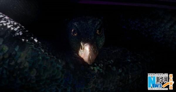 《神奇动物在哪里》明日上映 六大看点正确开启魔法大门