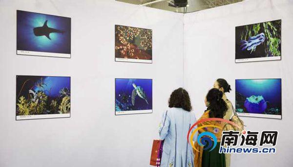 《影像保护海洋》主题公益展在海口举行展出近百幅精美震撼图片