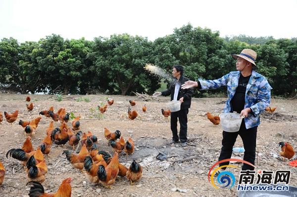 白沙青年带领下岗职工成立合作社 养鸡养鸭创业脱贫