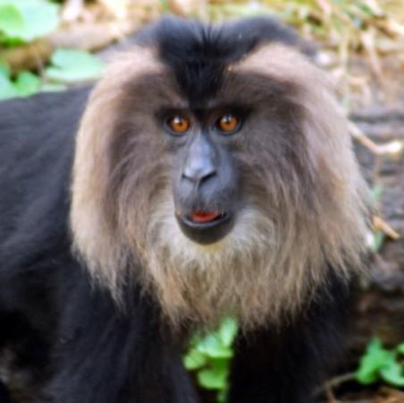 国外科学家网上争晒最帅的动物胡须