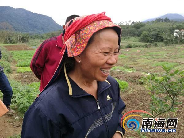 海南日报报业集团支持青松村建起了常年蔬菜种植基地