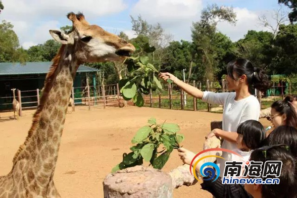 大年初二,海南热带野生动植物园迎来了大批亲子游,自驾游游客.