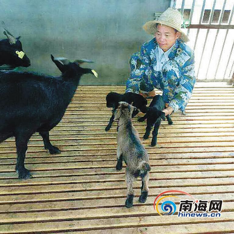 东方老马村72户贫困户养羊喜获分红:尝了甜头干劲更足