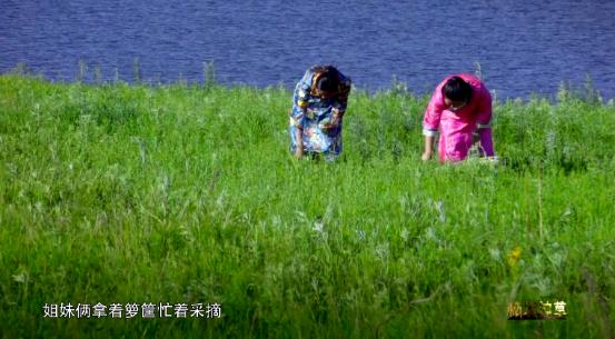 """《秘境神草》黎族""""药王""""展现古法黎术 """"救命""""野菜谱写民族传奇"""