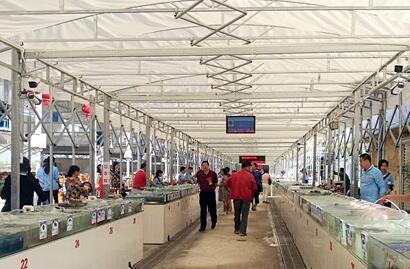 三亚老渔港改建成海鲜广场 41名国企职工再就业